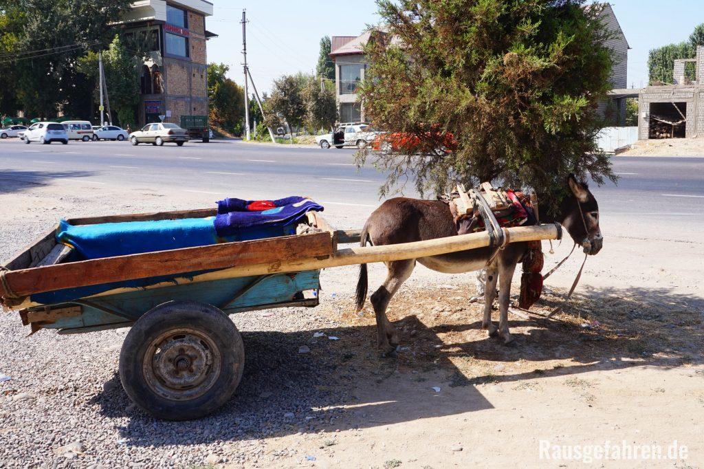 Esel in usbekistan